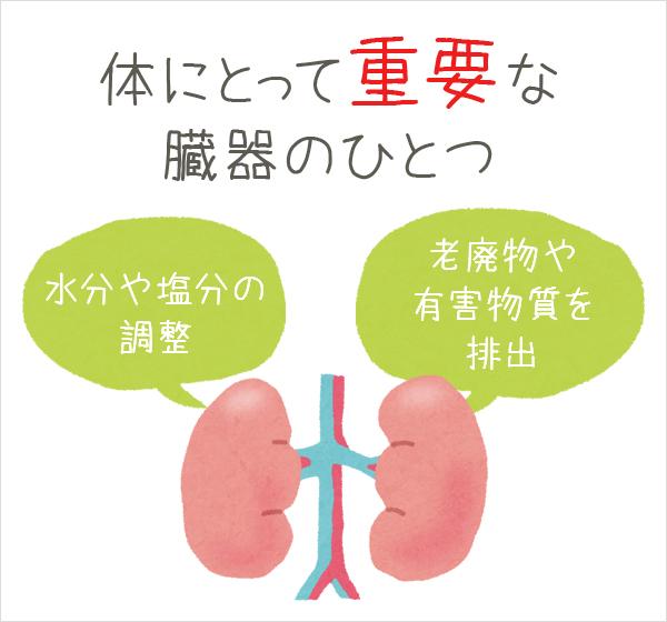 腎臓のはたらき
